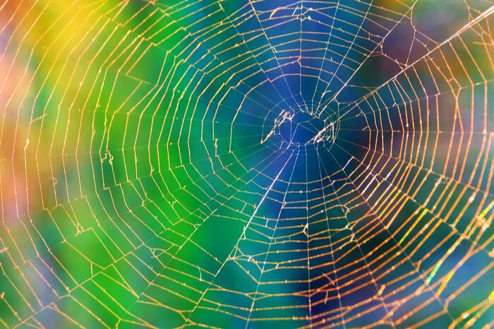 News-Bild Freitagsfundstück: DHL-Bote hat Angst vor Spinne